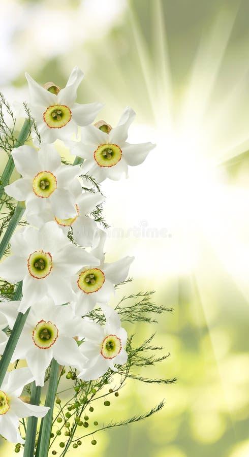 Beeld van witte mooie bloemen in het tuinclose-up stock afbeeldingen