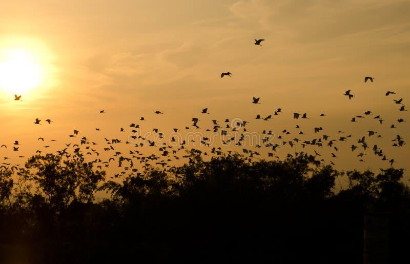 Zonsondergang en vogels in de hemel stock fotografie
