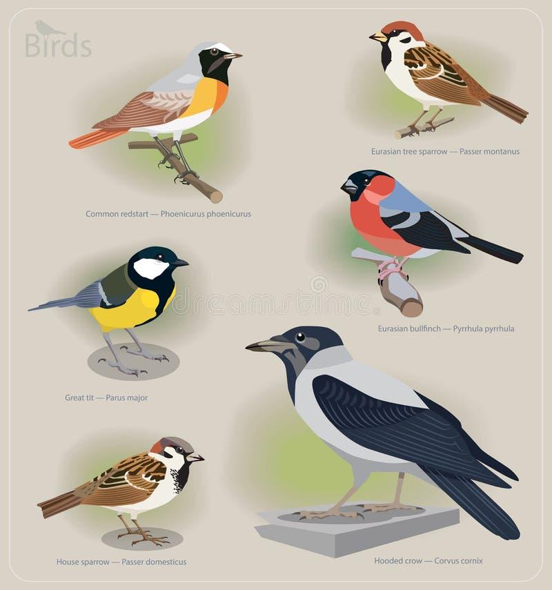 Beeldreeks vogels stock illustratie