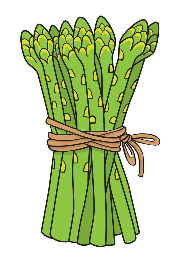 Beeldverhaalbeeld van asperge stock illustratie