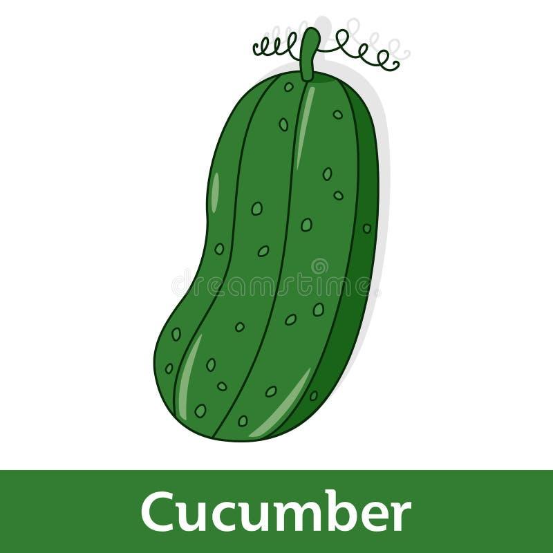 Beeldverhaalgroente - Groene Komkommer stock illustratie