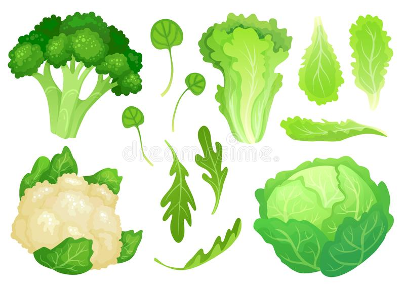 Beeldverhaalkolen Verse slabladeren, vegetarische dieetsalade en gezonde tuin groene kool Bloemkool hoofdvector royalty-vrije illustratie