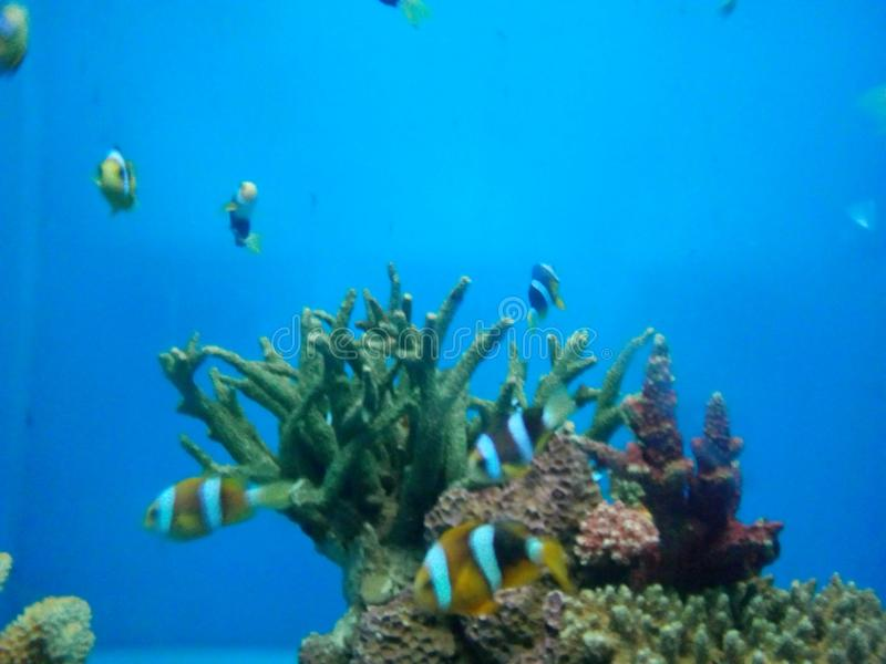 Beeldverhaalvissen in het aquarium bij het Aquarium van Samut Sakorn royalty-vrije stock afbeeldingen
