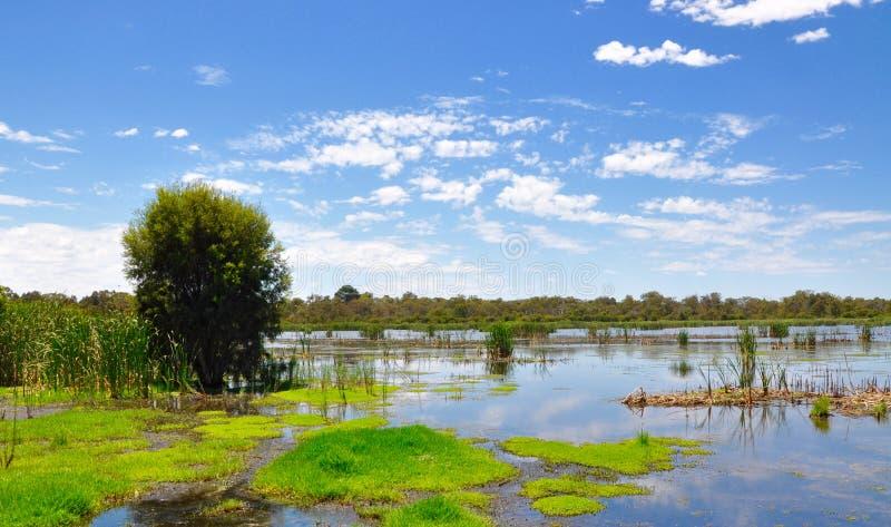 Beelier沼泽地绿色风景,西澳州 免版税图库摄影