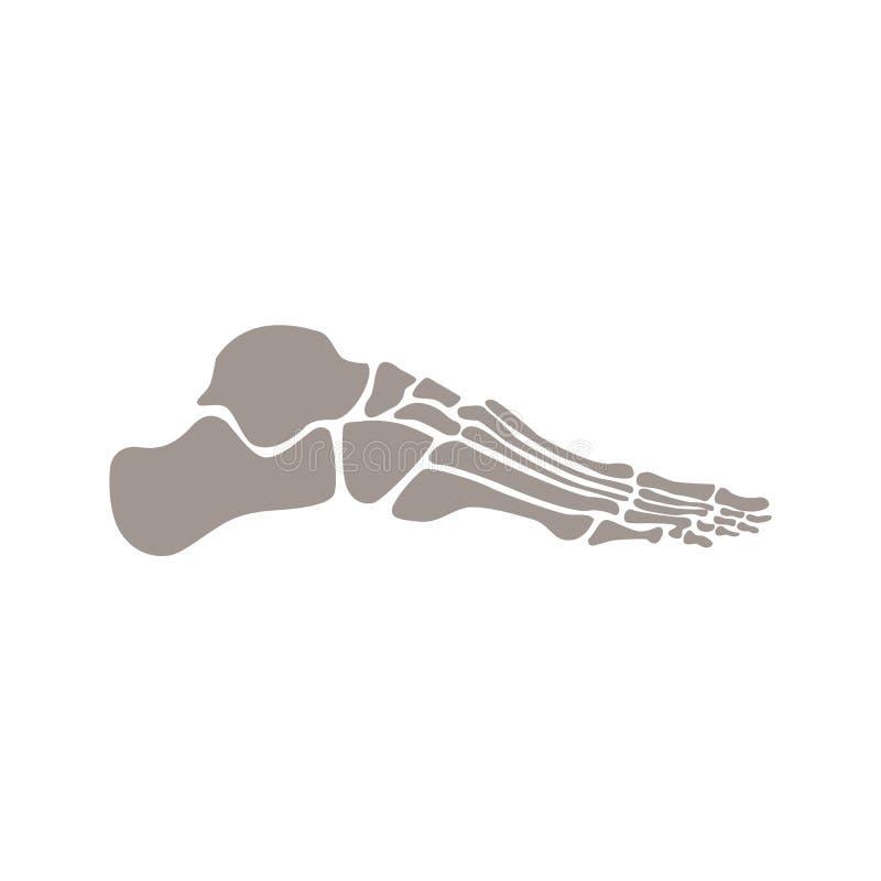 Beenderen van menselijke voet vector vlakke illustratie die op witte achtergrond wordt ge?soleerd stock illustratie