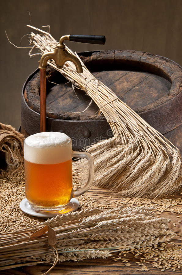 Beer. With wheat and barley royalty free stock photography