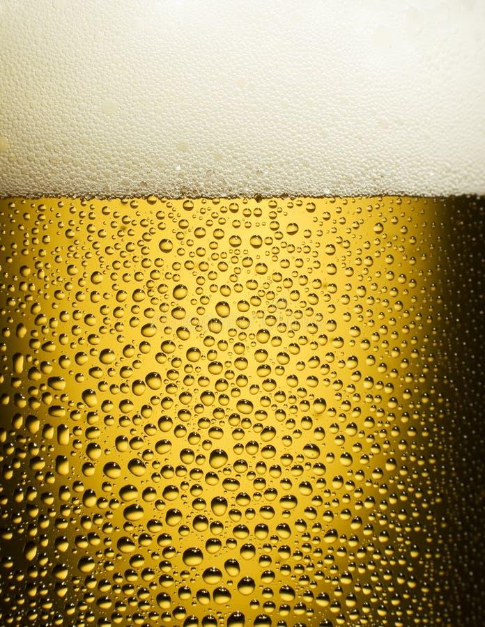 Download Beer stock photo. Image of beer, drops, fresh, refreshment - 5993340
