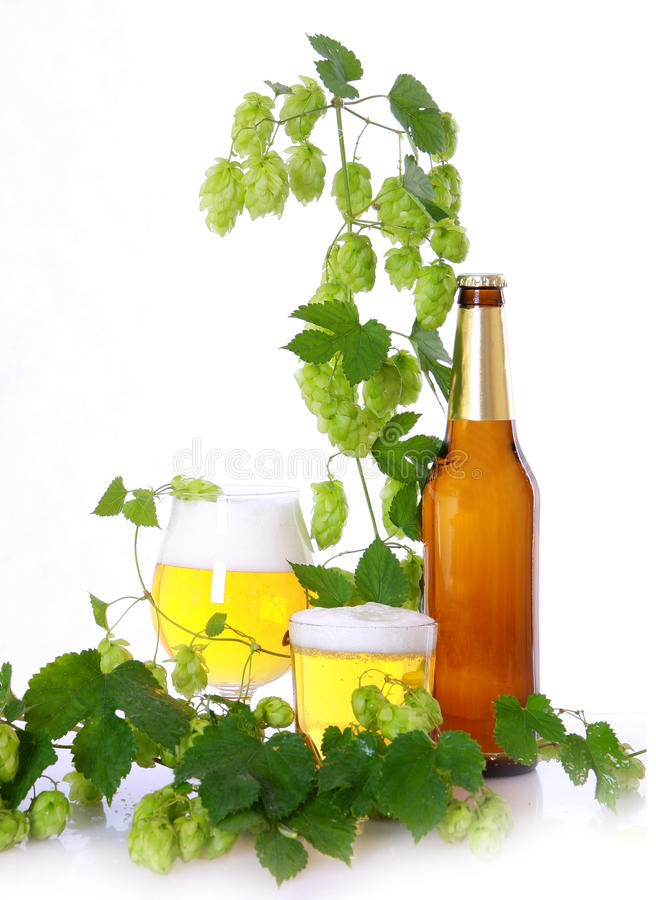 Free Beer And Hops Royalty Free Stock Photo - 10749405