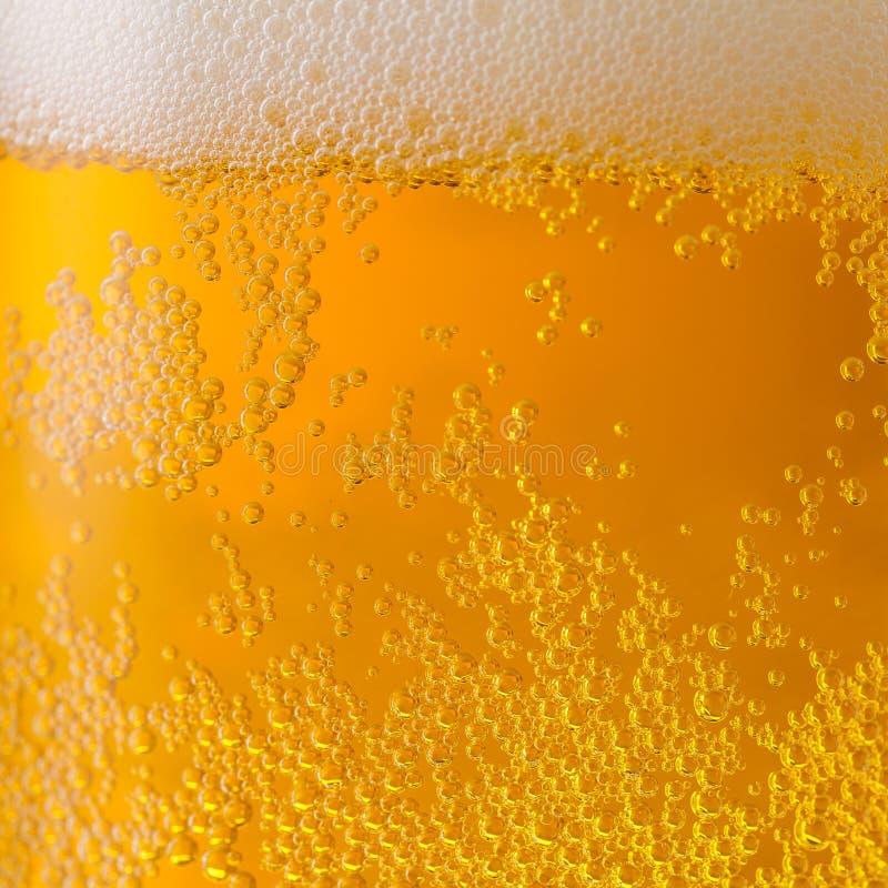 Fresh golden beer stock images