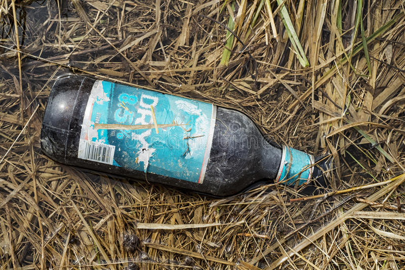 Beer bottle on grass. Trash beer bottle in the grass, nature pollution stock photography