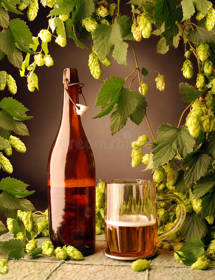 Beer bottle and with hops stock image
