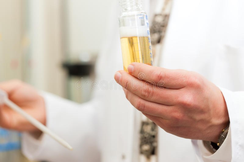 Beer Brewer in food laboratory examining. Brewer in the laboratory of his brewery and is doing analysis stock image