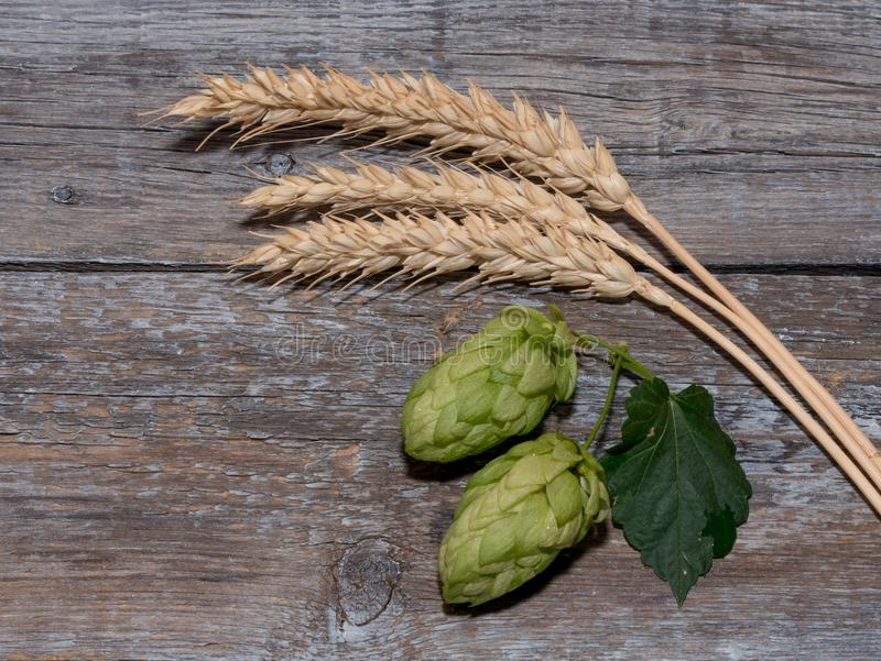 Beer brewing ingredients Hop cones in wooden board and wheat ear stock photo