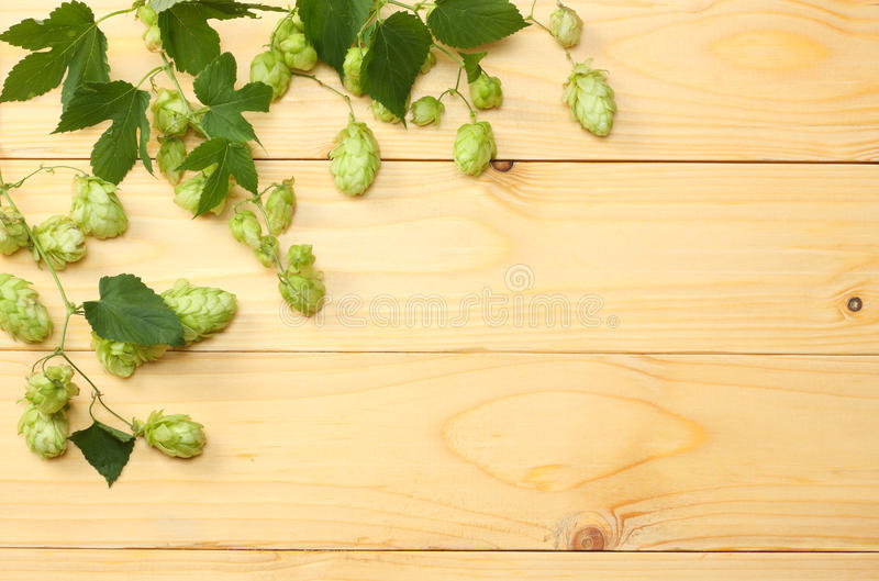 Beer brewing ingredients Hop on light wooden table. Beer brewery concept. Beer background. Top view with copy space royalty free stock image