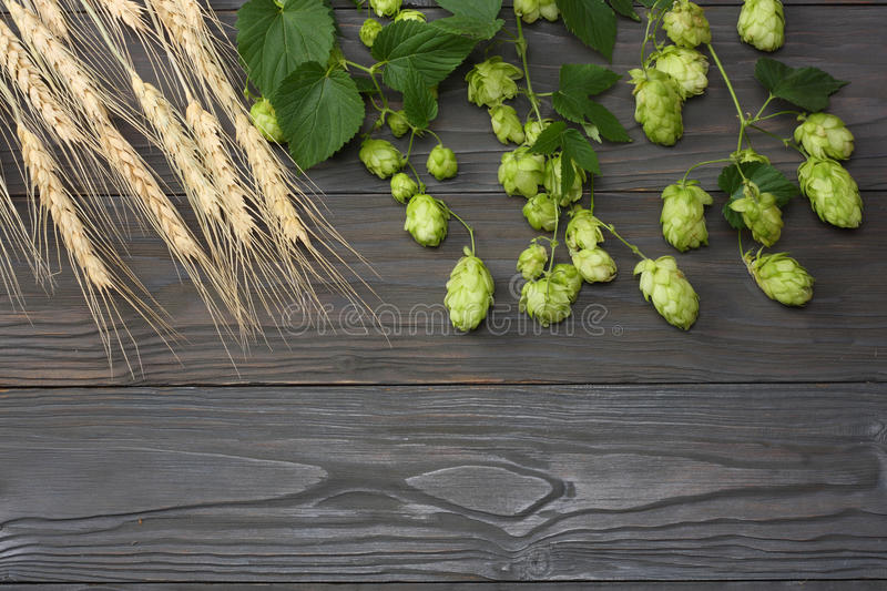 Beer brewing ingredients Hop and wheat ears on dark wooden table. Beer brewery concept. Beer background. Top view with copy space stock photography