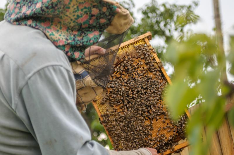 A beer with a desktop in his hands. Work on beekeeping as a hobby and work stock photo