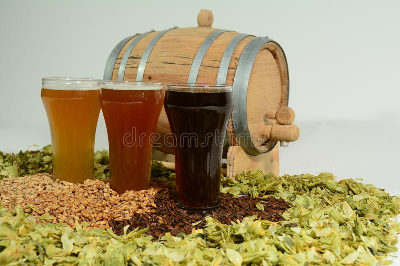 Beer in glass with grain and hops with barrel. Three beer styles with various colors of grain and hops with barrel in background stock photography