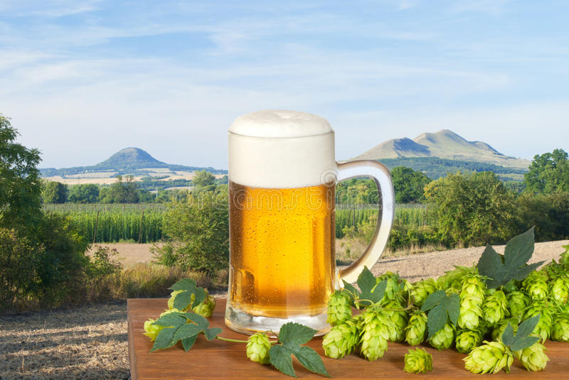 Beer. Glass of beer with hop cones royalty free stock image