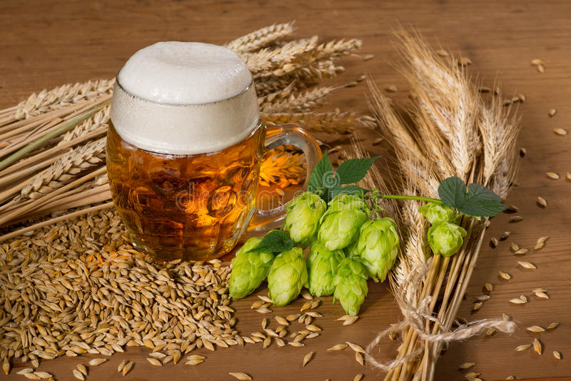 Beer glass and hops royalty free stock photography