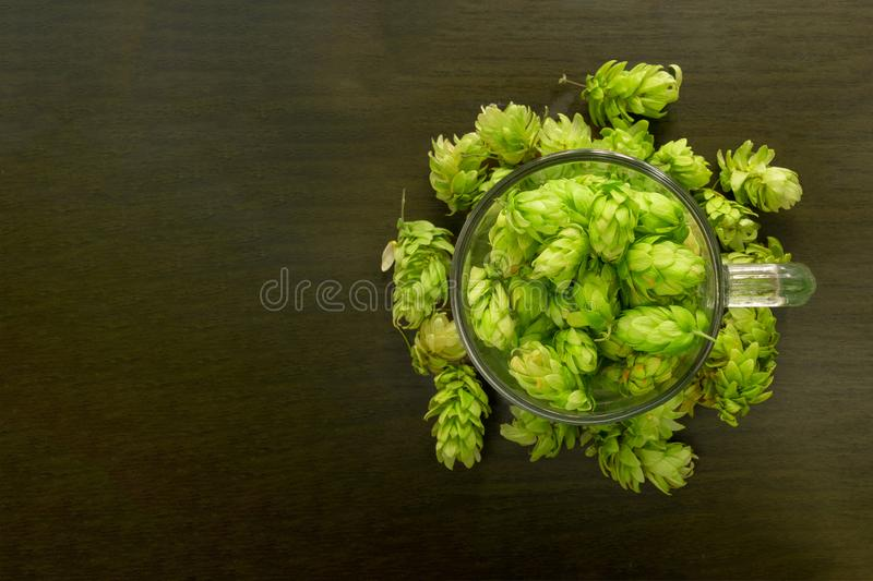 Beer glass mug filled with green hop cones. Concept of brewing process. Traditional craft ingredient for brewery. Top view with stock images