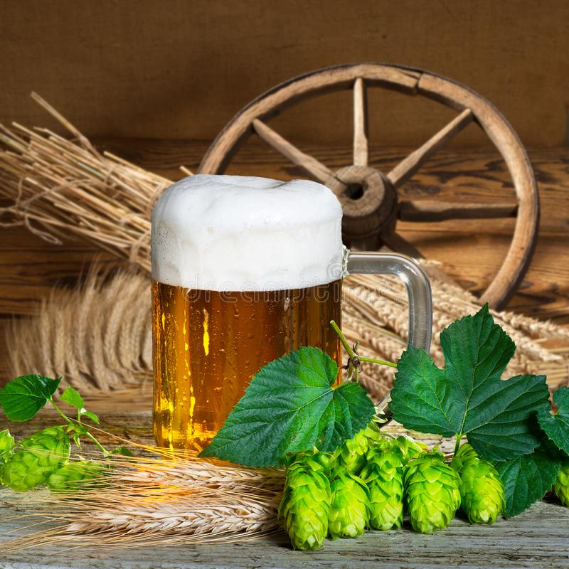 Beer glass. And raw material for beer production stock image