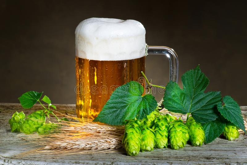 Beer glass. And raw material for beer production royalty free stock photography