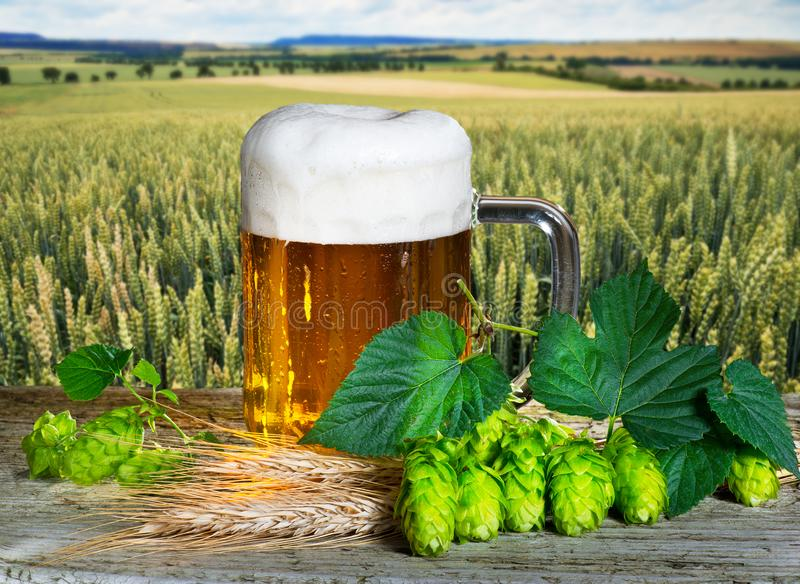 Beer glass. And raw material for beer production stock photo