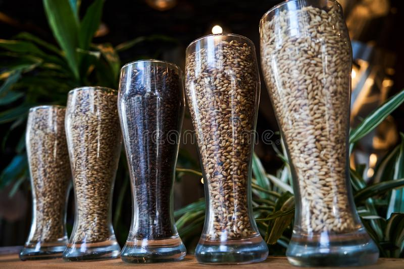 Beer glasses filled with different malts and hops, close-up. Brewery interior and equipment. Oktoberfest beer glasses with wheat and hops stock images