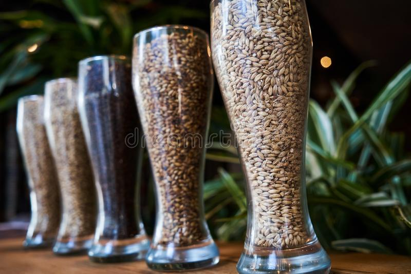 Beer glasses filled with different malts and hops, close-up. Brewery interior and equipment. Oktoberfest beer glasses with wheat and hops stock image