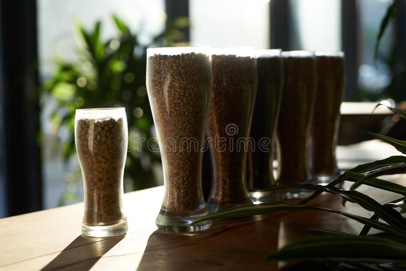 Beer glasses filled with different malts and hops, close-up. Brewery interior and equipment. Oktoberfest beer glasses with wheat and hops royalty free stock image
