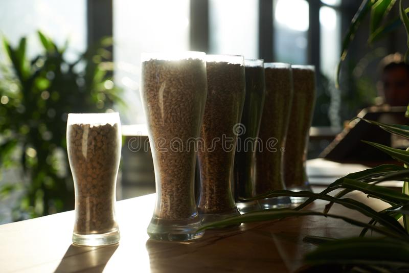 Beer glasses filled with different malts and hops, close-up. Brewery interior and equipment. Oktoberfest beer glasses with wheat and hops stock photos