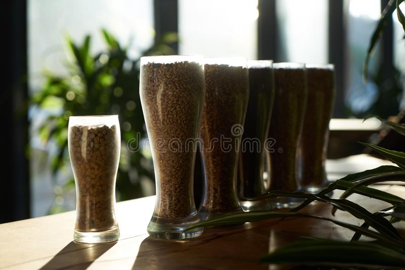 Beer glasses filled with different malts and hops, close-up. Brewery interior and equipment. Oktoberfest beer glasses with wheat and hops stock photography