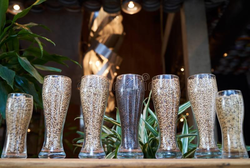 Beer glasses filled with different malts and hops, close-up. Brewery interior and equipment. Oktoberfest beer glasses with wheat and hops stock photo