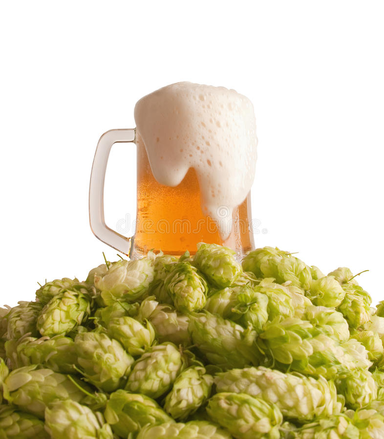 Beer and a hop stock photo