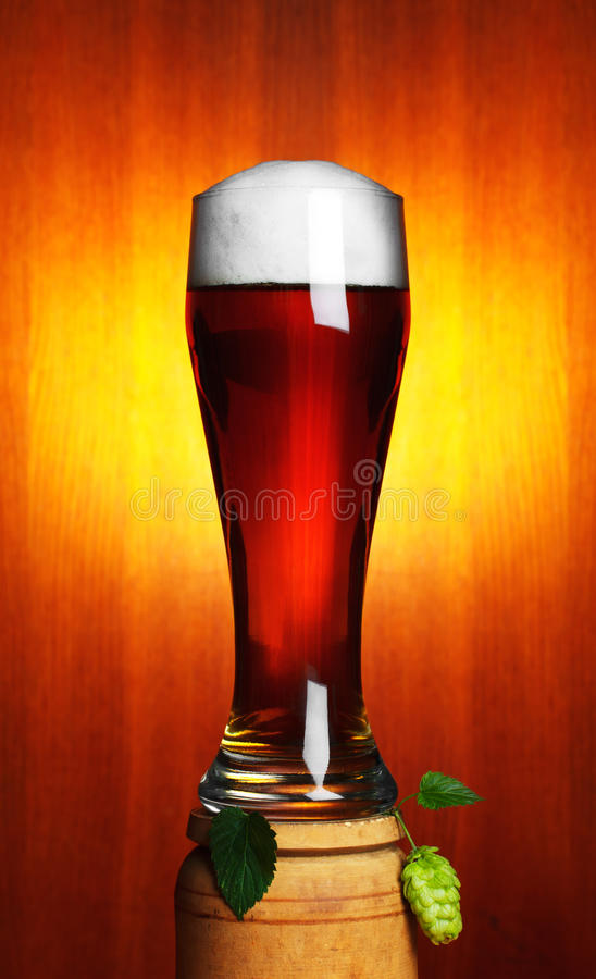 Download Beer and hop stock photo. Image of glass, fresh, food - 22856592