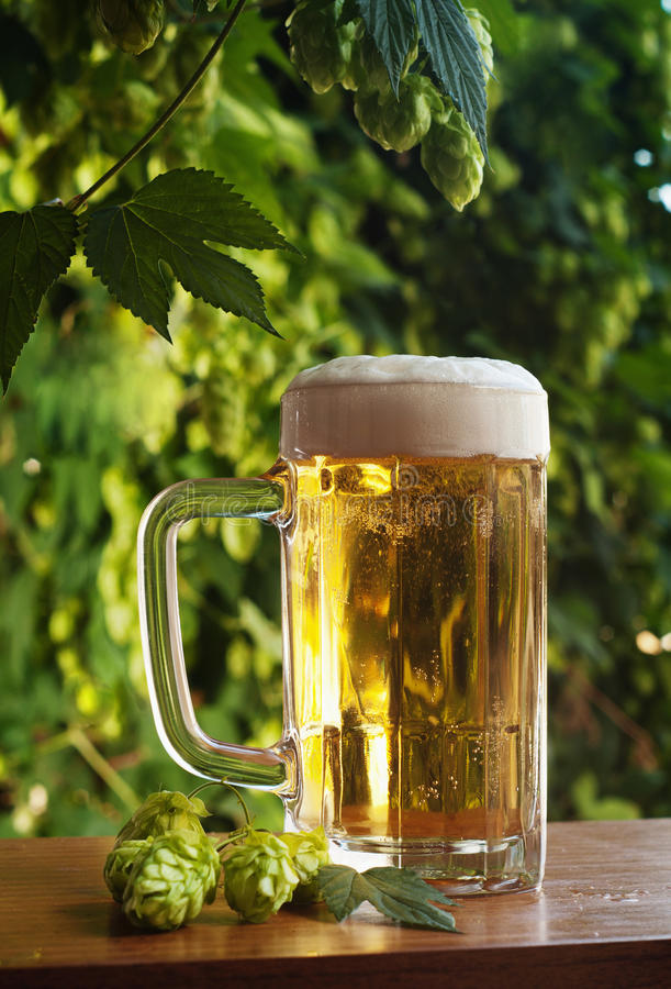 Beer and hop. Glass of beer on a background of hop royalty free stock images