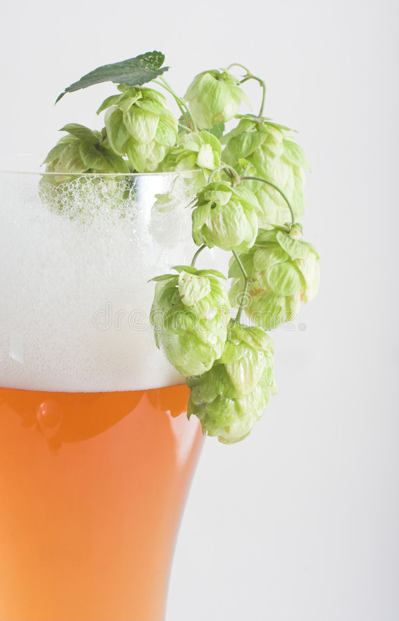 Beer and hop stock image