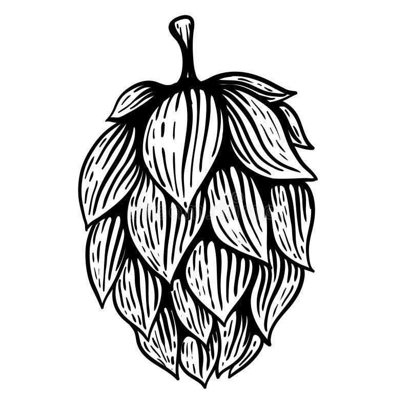 Beer hop in engraving style. Design element for poster, card, banner. Vector illustration vector illustration