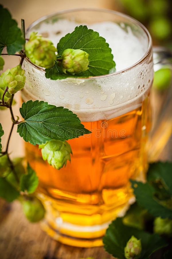 Beer with hop royalty free stock photos
