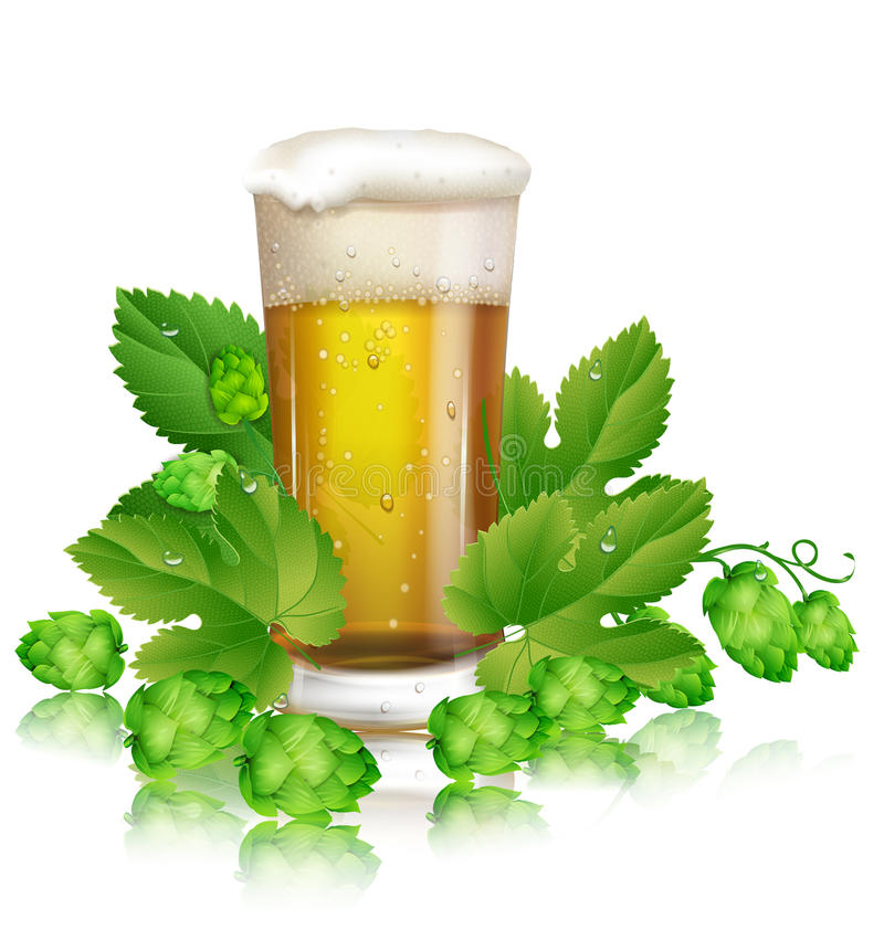 Beer and hops. Glass of beer and hops royalty free illustration