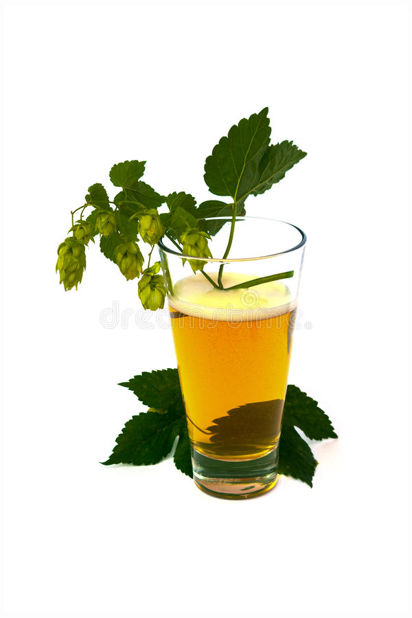 Beer with hops isolated on white background stock photos