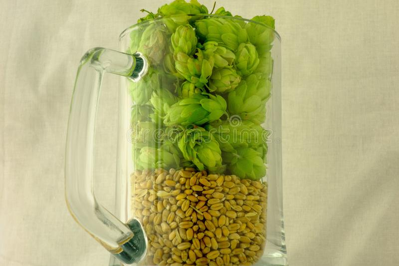 Beer mug filled with green hop cones and barley grains. Concept of brewing process. Traditional craft ingredients for brewery. stock photo