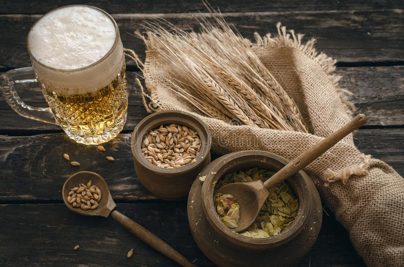 Glass of frothy beer, malt and hop. stock images