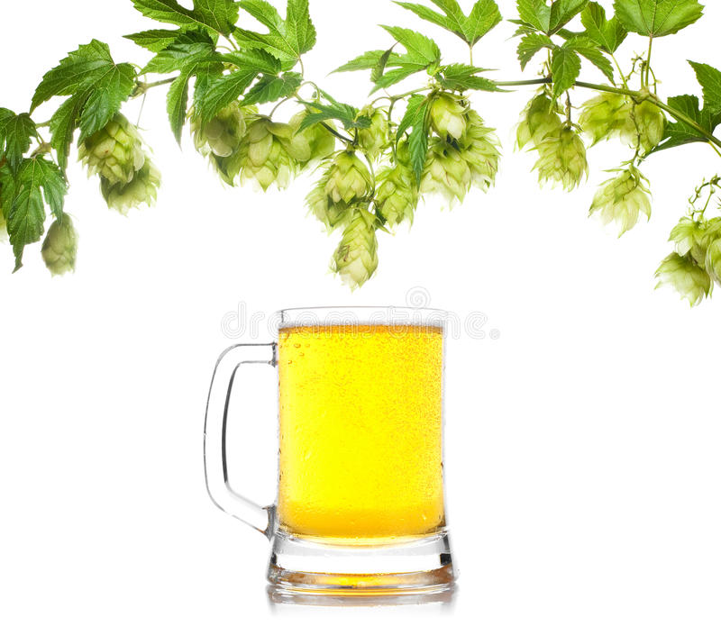 Download Beer mug with hop stock image. Image of branch, climber - 15962019
