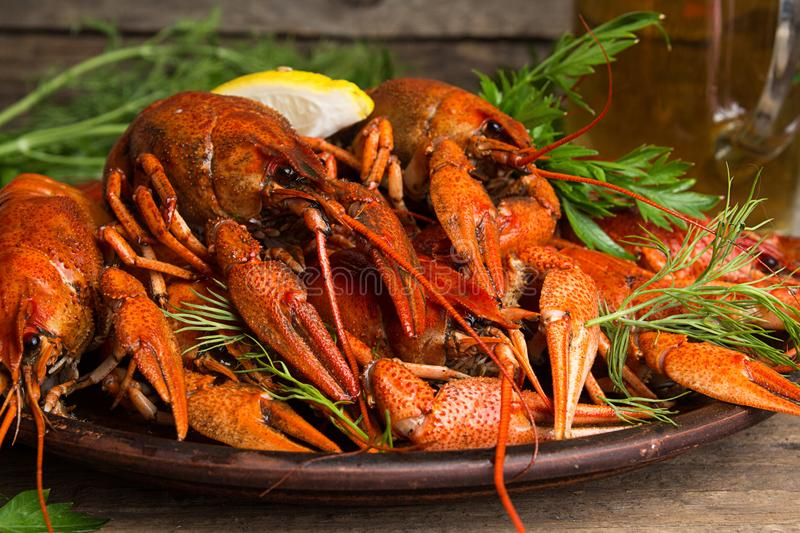 Beer party. Still life with glass of beer, crayfish crawfish aga. Inst old wooden rustic background. Front view stock photography