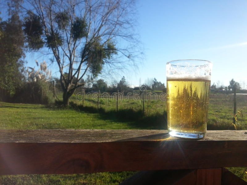 Beer. Relaxing in the field stock photo
