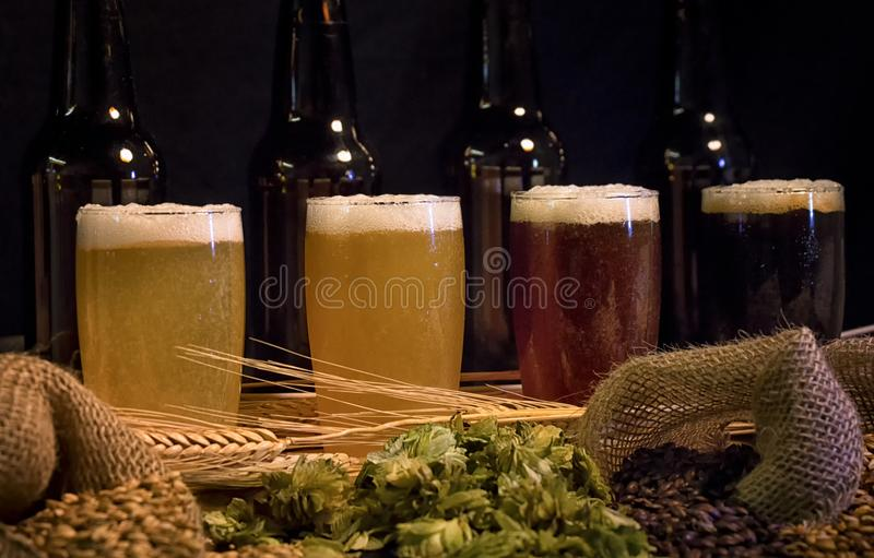 Beer tasting set with home brew ingredients. From light to dark, beer tasting set with home brew ingredients,hops and grains royalty free stock photos