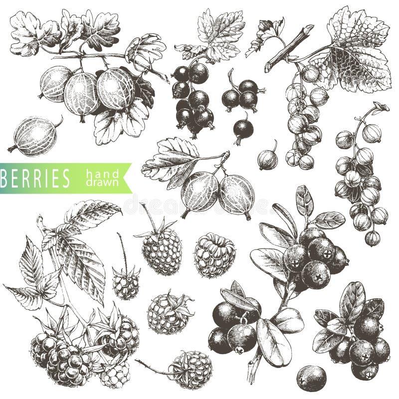 Beeren stock abbildung
