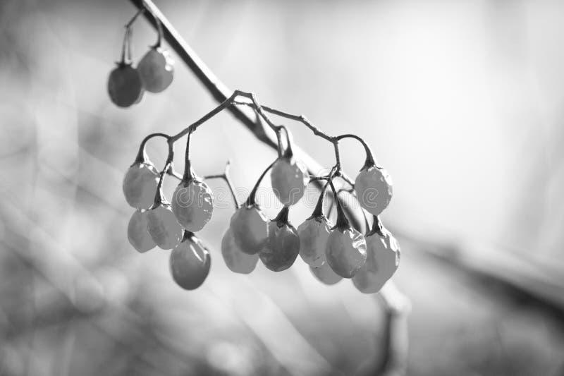 Beeren auf dem See im November lizenzfreie stockfotografie