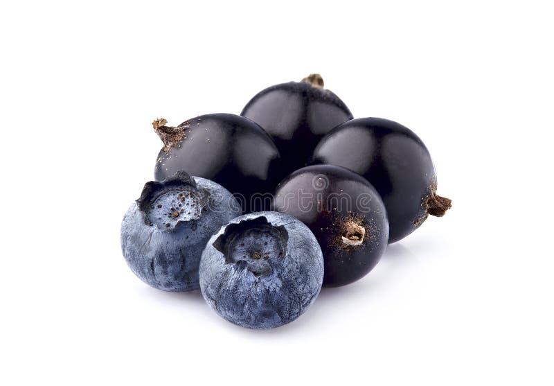 Beeren der Schwarzen Johannisbeere mit Blaubeere auf dem weißen Hintergrund lokalisiert Reife Beeren lokalisiert lizenzfreie stockbilder
